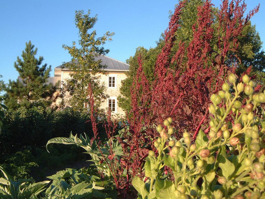 Les plantes la soci t des plantes for Commander des plantes