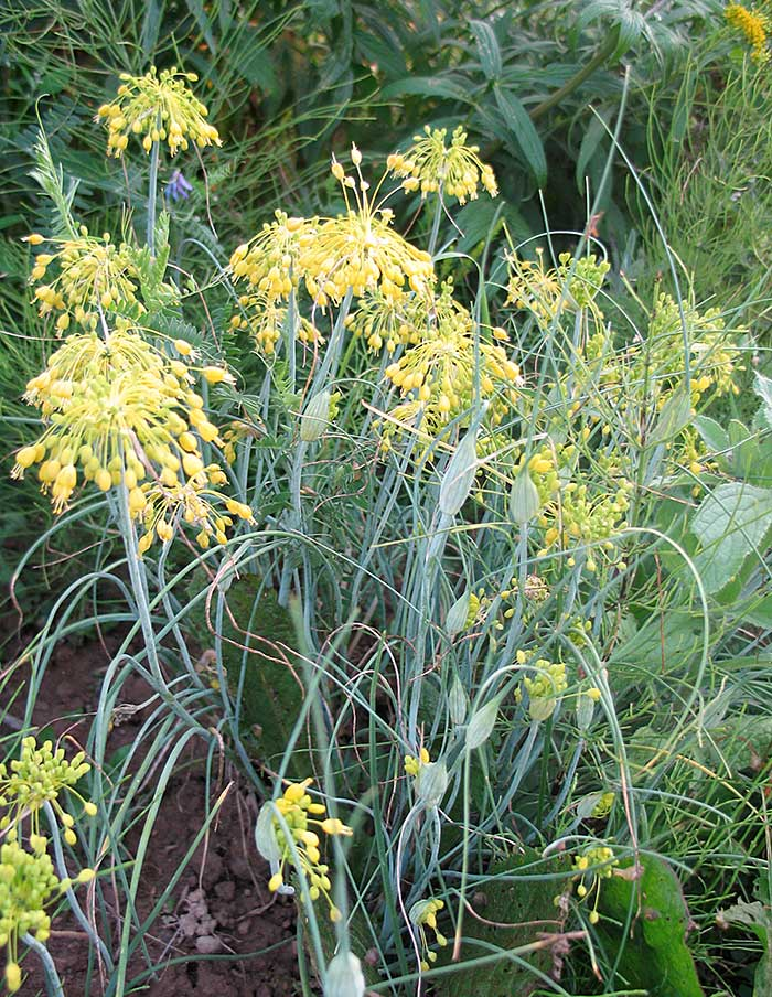 Graines Pot Decoratif Cyuisine