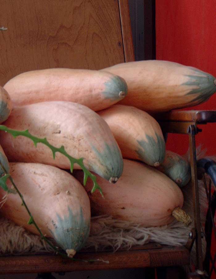Courge d hiver north georgia candy roaster la soci t des plantes - Legumes d hiver liste ...