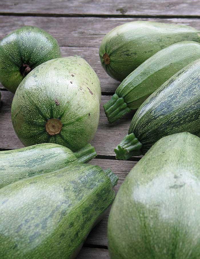 Courge d t jewel green la soci t des plantes - Legumes d hiver liste ...