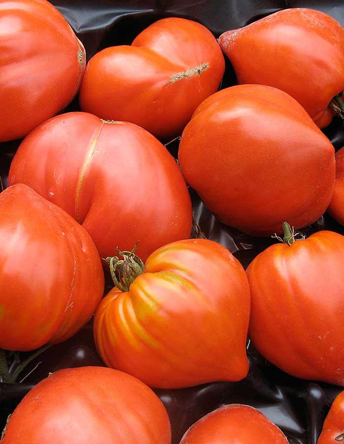 Tomate coeur de boeuf la soci t des plantes - Planter des tomates coeur de boeuf ...