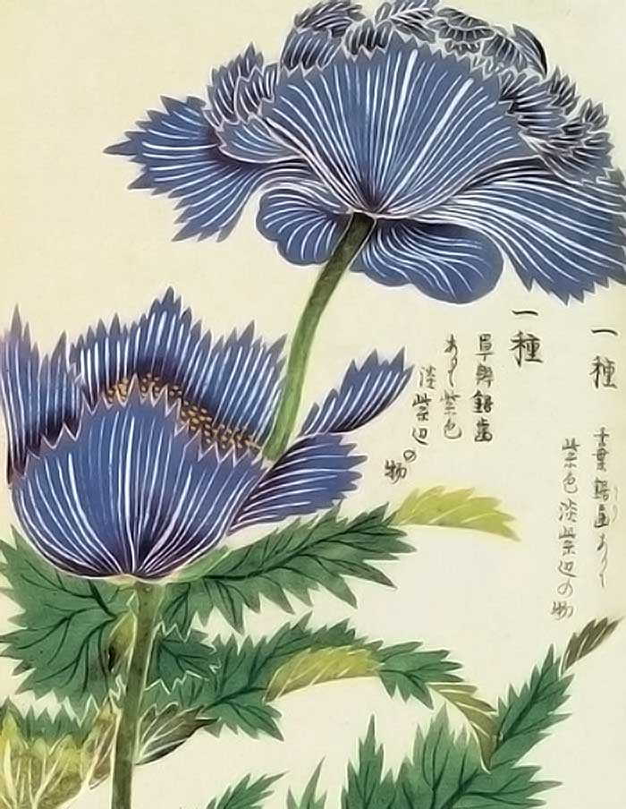 Par Kan'en Iwasaki/Iwasaki Tsunemasa (1786-1842) — //pinterest.com/lucyalyce/my-little-hothouse/, Domaine public, //commons.wikimedia.org/w/index.php?curid=21917294