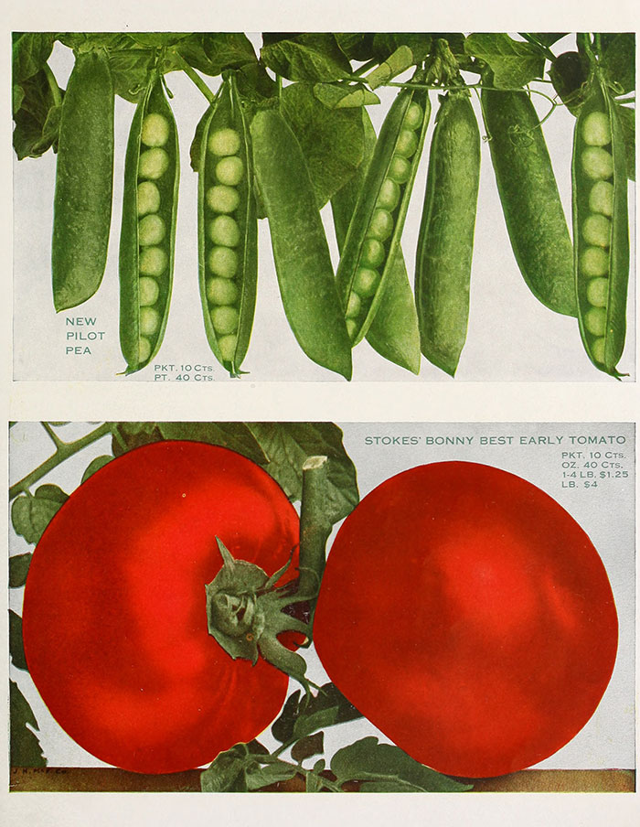 Par Walter P. Stokes (Firm);Henry G. Gilbert Nursery and Seed Trade Catalog Collection — //www.flickr.com/photos/internetarchivebookimages/14741264906/Source book page: //archive.org/stream/stokesstandardse1913walt/stokesstandardse1913walt#page/n28/mode/1up, No restrictions, //commons.wikimedia.org/w/index.php?curid=44156487