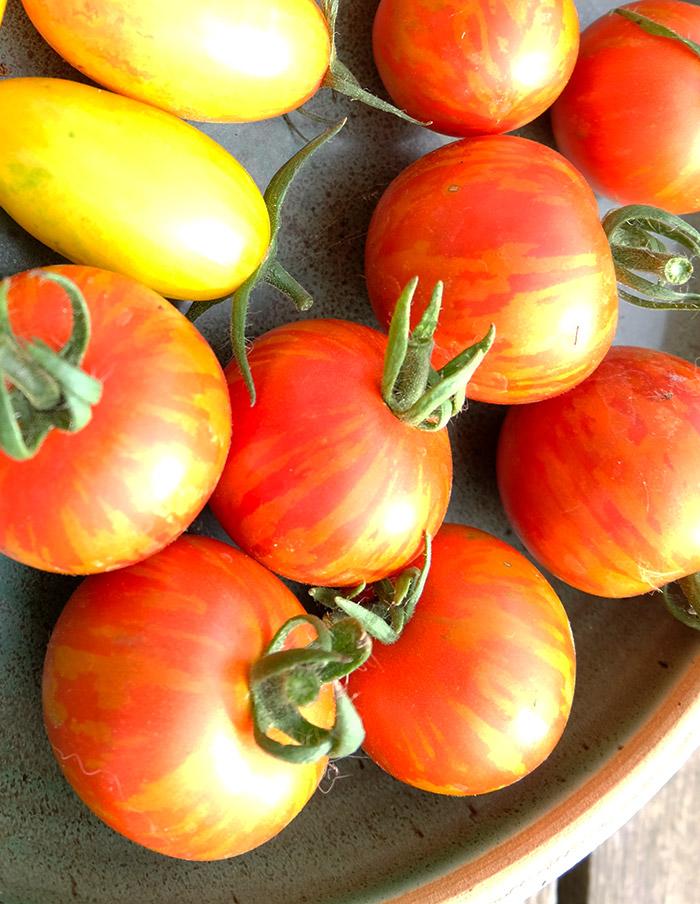 Tomate Joyau d/'oaxaca 25 graines